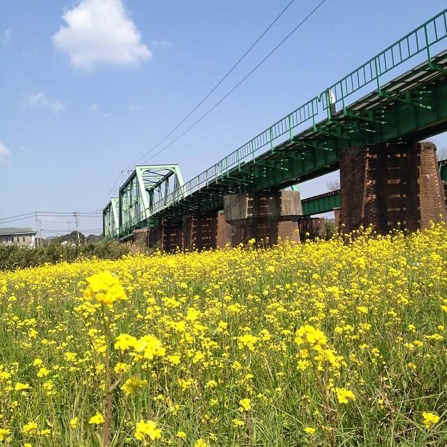 菜の花越しに鉄橋と空と雲 #イマソラ #空 #雲 #like